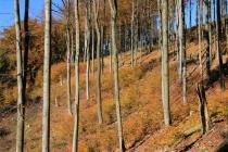 Góry Suche - cestou na Rogowiec