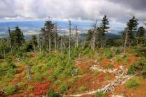 Hraniční skály - Góra Goworek
