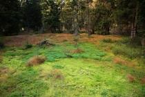 Krkonoše - Černá hora, smrčina s rašeliníkem