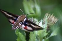 Noční motýli