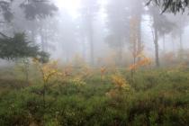 NPR Bukačka v Orlických horách