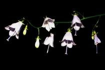 Památné rostliny