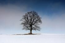 Vzpomínka na dlouhou zimu