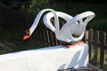 Sudetská labuť