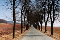 A krásná může být i silnice pro auta... Zde alej do Šonova na Broumovsku.