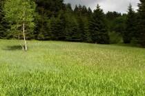 Dobrošov - rašeliniště Pod hájenkou