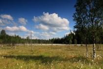 """Kousek od českých hranic leží v Polsku jedno z největších sudetských rašelinišť Torfowisko pod Zielencem, které hostí mnoho reliktních druhů a je ojedinělou ukázkou """"severské"""" přírody ve střední Evropě."""