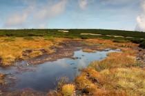 """Vůbec asi nejtypičtější ukázku """"tundry"""" ve střední Evropě pak představuje Úpské rašeliniště - nejvýše položené rašeliniště v Sudetech. Rostou tu nejznámější glaciální relikty - ostružiník moruška a všivec sudetský."""