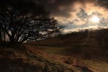 Pastviny s nádhernými starými hlohy