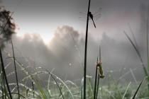 Líhnutí vážky, Skály - Černé jezírko, 5.7.2012