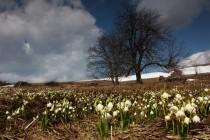 Na jaře tu kvetou koberce bledulí