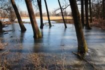 Zbytka v předjaří - v lužním lese stojí voda