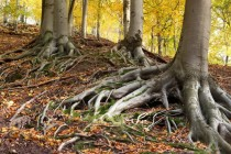 Nejhezčí partie PP Březinka tvoří frafmenty jedlobukových lesů přímo na hřebenu, který tvoří hranici s Polskem.