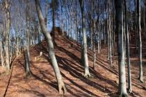 Březinka -  to jsou hlavně krásné bučiny na skalních výchozech u polských hranic