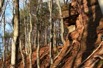 Místo je zajímavé i geomorfologicky - nacházejí se zde skalní výchozy červených permských slepenců, což je poměrně vzácný jev. Ze skal vzácně vypadávají i araukarity - zkamenělá dřeva. Roste zde tis a jezevci tady mají své nory.