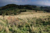 Louky v sedle nad Březovou