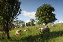 Sioukromá rezervace Ještěrčí ráj, Brod nad Labem - o lokalitu pečují ovce a kozy