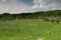 Les Halín - jedna z botanicky nejzajímavějších lokalit Podorlicka