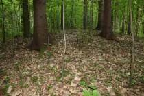 Pravěké mohyly s žárovými hroby vypadají po těch tisícovkách let jen jako nevysoké pahorky přerostlé lesem. Jejich datování je obestřeno mnoha záhadami - našla se v nich keramika z doby bronzové (lužická kultura) ale i raně slovanská z doby hradištní