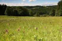 Na prameništích jsou botanicky hodnotná slatinná společenstva se suchopýry a orchidejemi