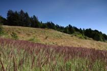 Některé ze zdejších strání postupně zarůstají expanzními travinami - pokud se zde mají ohrožené druhy udržet, je třeba s tím začít něco dělat...