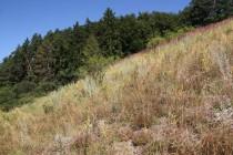 Xerotermní stráň u obce Hraničky je společným domovem hnědáska květelového i modráska černosvrnného