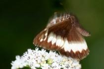 Z dalších vzácných druhů zde létá například krásný okáč voňavkový