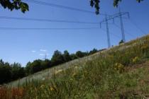 ... hnědásek Didyma se drží spíše v horní části stráně, která po odstranění dřevin postupně zarůstá diviznami.