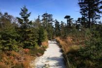 Po výstupu na náhorní plošinu projdeme prosvětleným zbytkem lesa