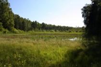 Odkaliště Jívka patří k přírodně nejcennějším lokalitám náchodského okresu