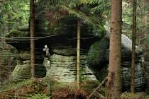 Je to takový pohádkový lesík, jeden hříbek vedle druhého...
