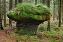 Nejhezčí houby v republice rostou v Broumovských stěnách nad Božanovem...