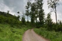 Lesy u Sokolowska na hranicích s Broumovskem - lokalita jasoně dymnivkového