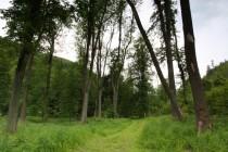 Lesy u Sokolowska