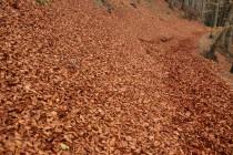 Opadané listí tu na podzim vytváří úplé závěje