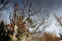 Na slunných skalách s jižní expozicí rostou staré duby