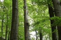Zdejší lesy mají místy lehce pralesní ráz