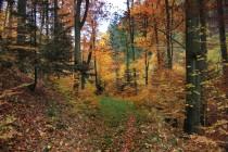 Na podzim lesy hýří všemi barvami