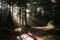 Místy cesta vede lesem mezi skalkami
