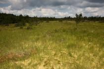 Rašeliniště se suchopýrem