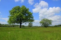 Na sušších místech se objevují krásné soliterní stromy