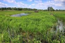 Obnovené propusti umožňují louky každé jaro znovu opět nasytit vodou