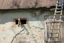 Případné návštěvníky vítají psi