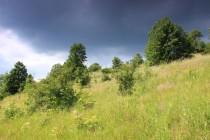 Na jižních stráních střídají ovsíkové louky sušší krátkostébelné trávníky s mateřídouškou