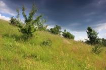 Na jižních stráních střídají ovsíkové louky s vysokou trávou sušší krátkostébelné trávníky s mateřídouškou