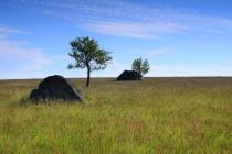 S osamocenými stromy a kameny