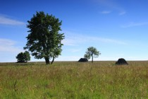 Začátkem léta je tráva ještě svěže zelená
