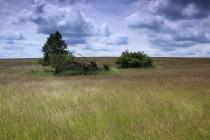 Skupinky stromů dokládají, kde usedlosti stávaly