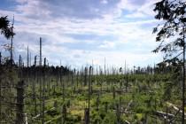 Jsme v národním parku a tak na mnoha místech zůstávají stát uschlé vybělené kmeny, mezi kterými se ale už objevují nové stromky. Vypadá to na první pohled dost děsivě, ale sem se les už zvolna vrací...