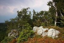 Na skalách  vřes a borůvky, sosny, břízy a jeřáby